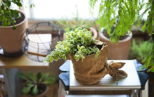 【観葉植物や園芸用品を扱うおシゴト♪】